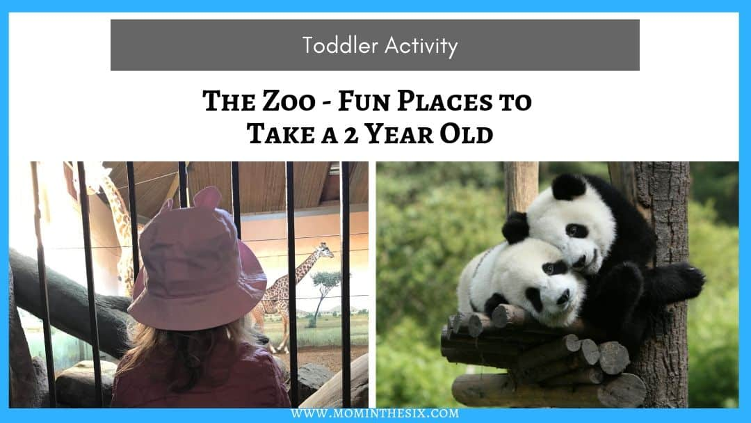 Places to Go With A Toddler – The Zoo