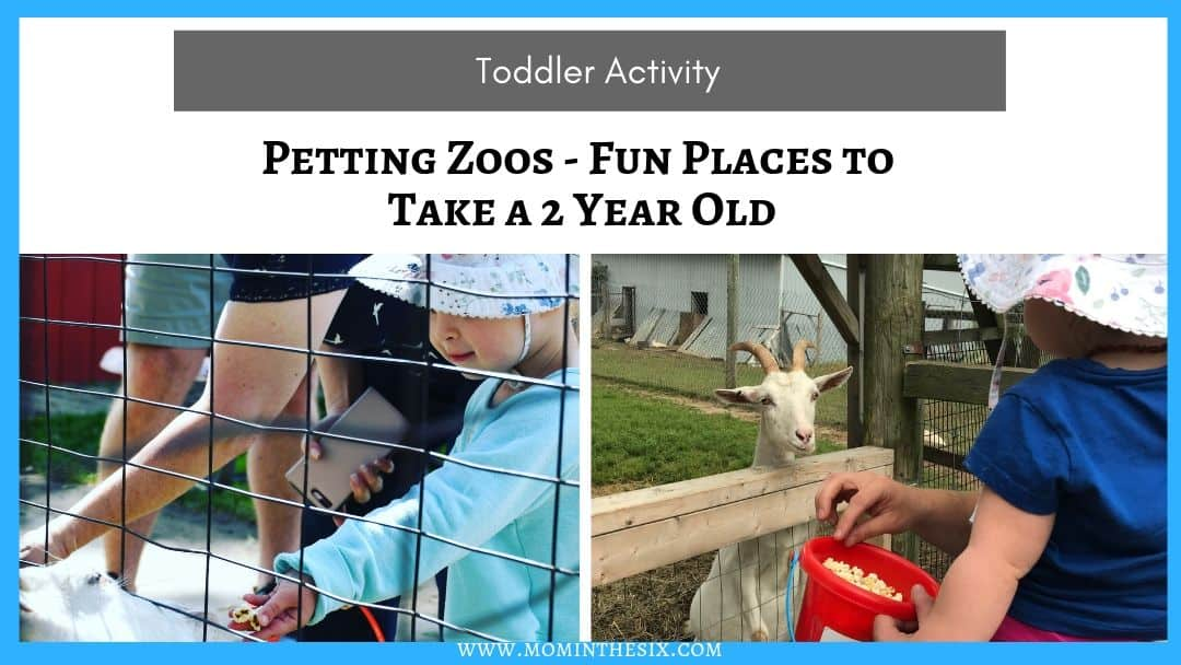 Petting Zoos – Great Places To Go With A 2 Year Old